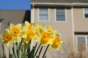 CT Spring Weather Forecast - CT Energy Ratings: The Blog